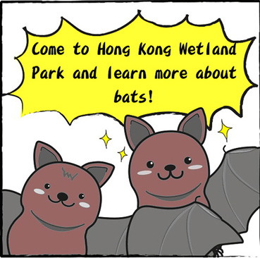bats at Wetland Park-eng