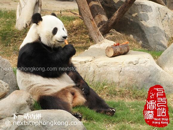 Panda-Eating-Carrots