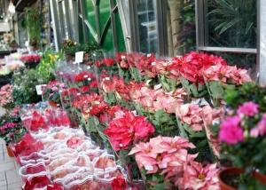 Flower Street Market Hong Kong
