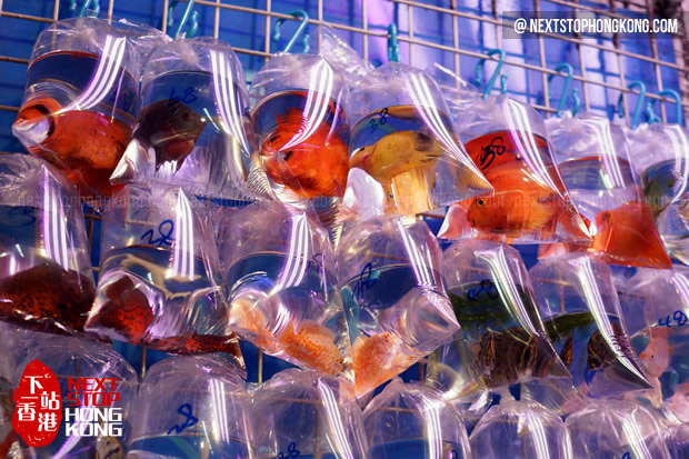 Goldfish at Goldfish Market