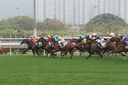 Try Your Luck on 2017 Hong Kong Chinese New Year Horse Day