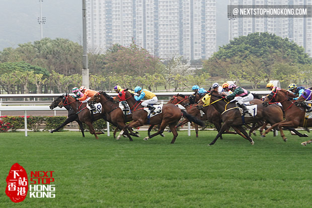 Horse Racing in Sha Tin Racecourse