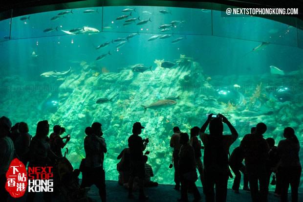 游客在巨大的水族箱前拍照 (海洋奇观,海洋公园)