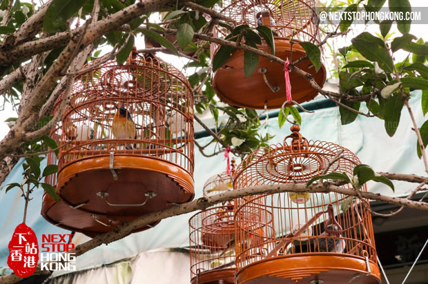 Bird Cages at Bird Garden
