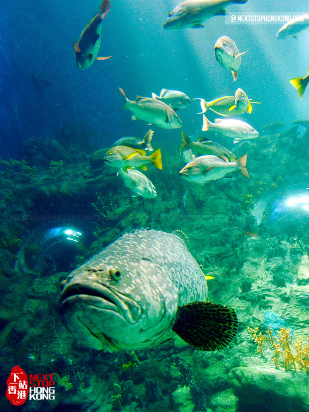 巨型水族箱里懒洋洋的大鱼(海洋奇观,海洋公园)