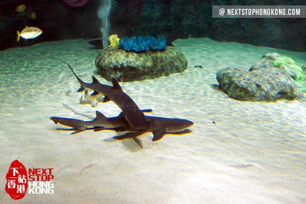 巨型水族箱里懒懒的鲨鱼