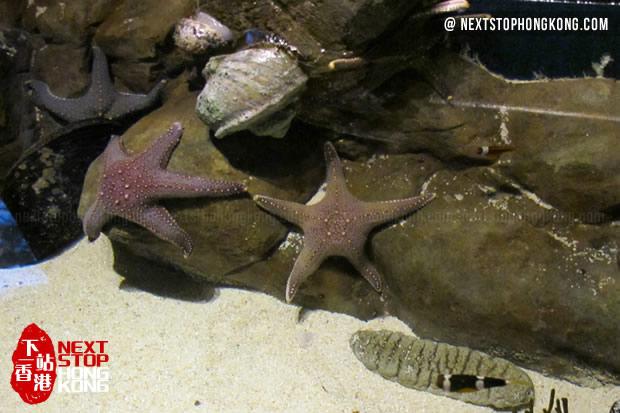 Starfish in Touch Pool of Grand Aquarium, Ocean Park