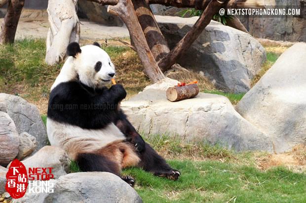 Panda Eating Carrots in Ocean Park (didn't know Panda likes carrots)