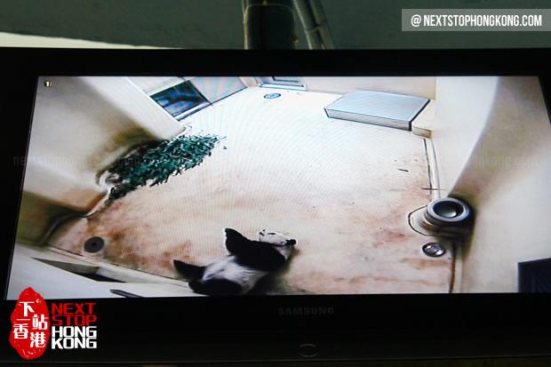 从屏幕上看见熊猫在睡懒觉