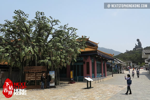 Bodhi Wishing Shrine in Ngong Ping Village