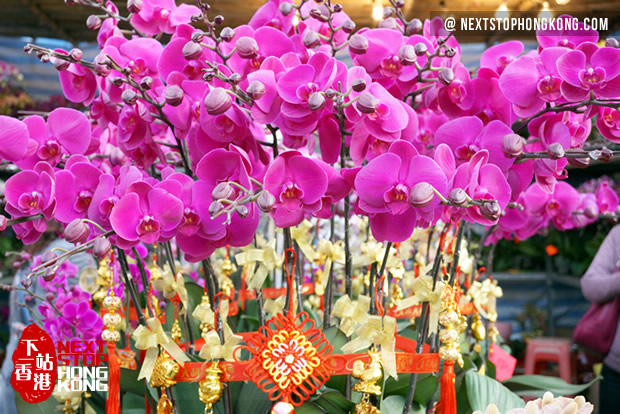 2019 hong kong chinese new year flower market moth orchid