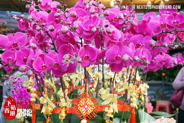 2018 Hong Kong Chinese New Year Flower Markets | NextStopHongKong ...