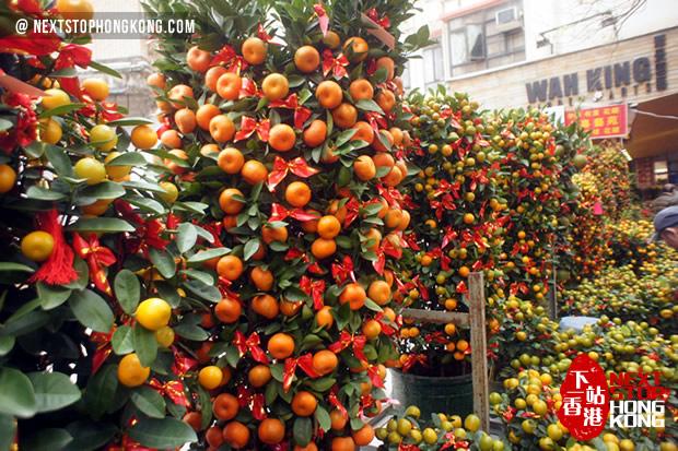 2018 Hong Kong Chinese New Year Flower Markets - Winter Jasmine