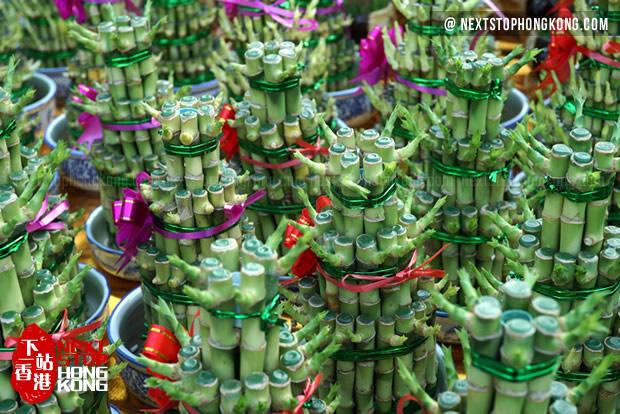 2018 Hong Kong Chinese New Year Flower Markets - Lucky Bamboo