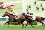 Try Your Luck on 2018 Hong Kong Chinese New Year Horse Day