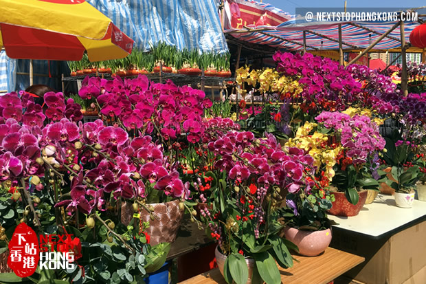 Orchid on Chinese New Year Flower Markets