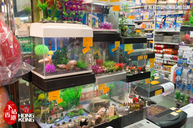 All-in-One Guide of Goldfish Market - Hong Kong Street Market